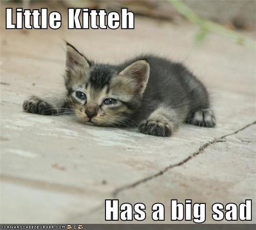 kitteh Sad kitten cute - 7881138688
