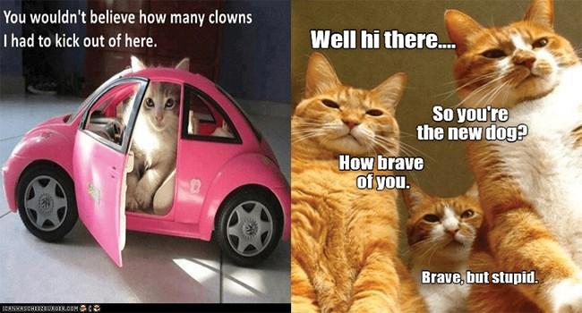 funny cat memes lolcats lol funny cats Cats cat memes - 7881221
