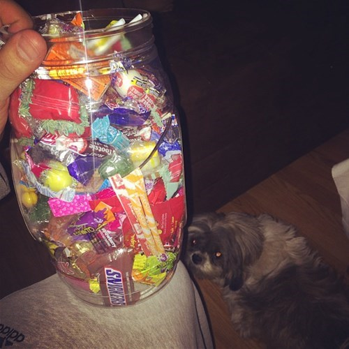 candy photobomb dogs cute - 7881228032