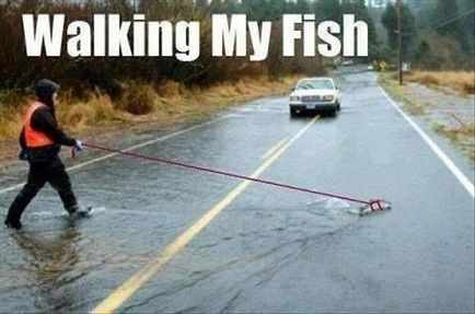 pet walking fish weird