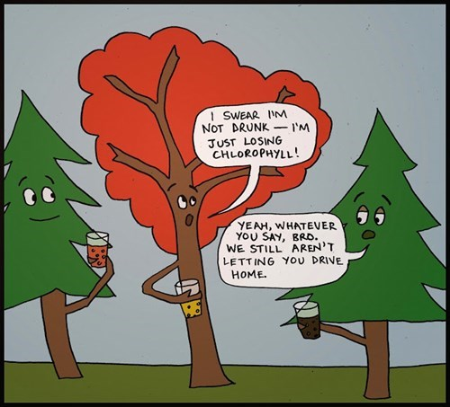 trees wtf web comics - 7881355264