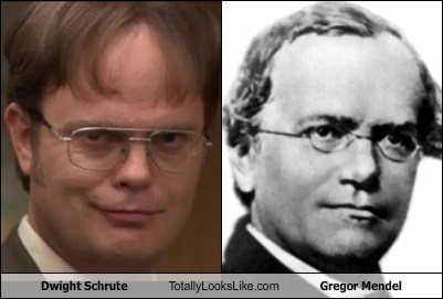 Gregor Mendel,dwight schrute,totally looks like,funny