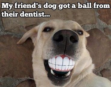 dogs,dentist,teeth,ball,play