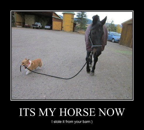 ITS MY HORSE NOW I stole it from your barn:)