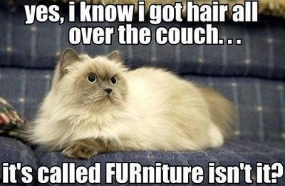 fur furniture couch logic Cats - 7881464576