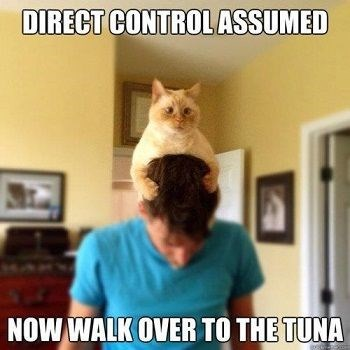 tuna cute control Cats - 7881475328