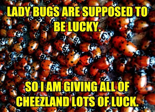LADY BUGS ARE SUPPOSED TO BE LUCKY.     SO I AM GIVING ALL OF CHEEZLAND LOTS OF LUCK.