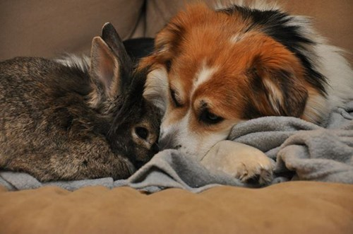 bunnies,dogs,unlikely friendships,cute