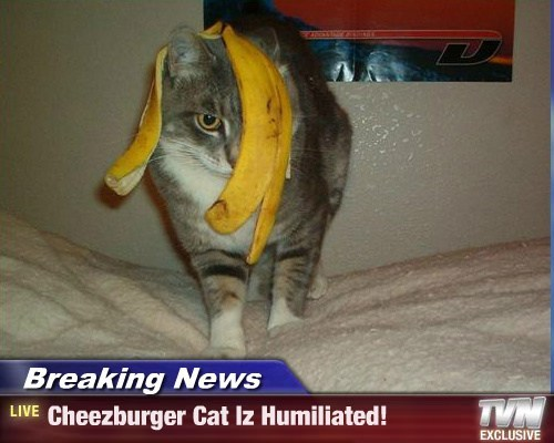 Cheezburger Image 7883324672