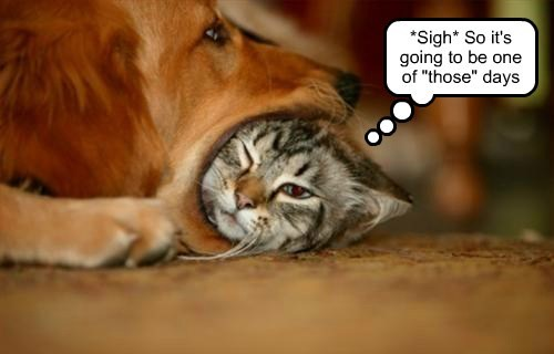 dogs cute Cats funny