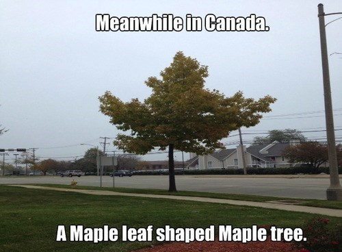 Canada trees puns - 7883930880