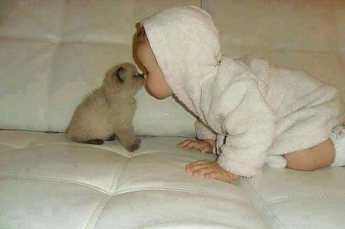 Babies friendship kitten cute