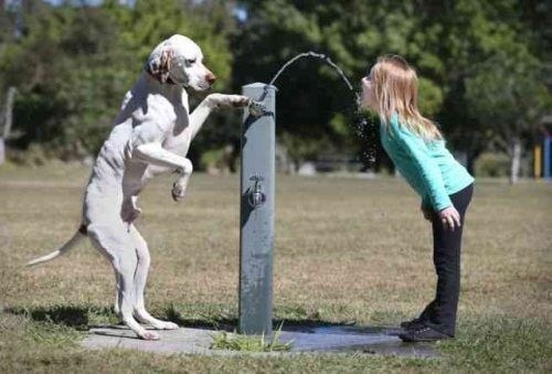 water fountain,dogs,friends,teamwork