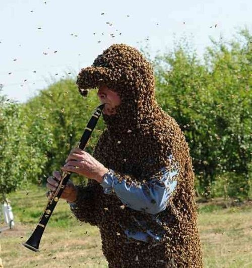 Music wtf bees funny - 7884179200
