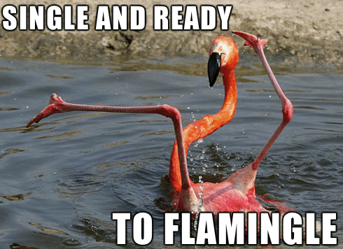 puns relationships flamingo animals pun - 7884337408