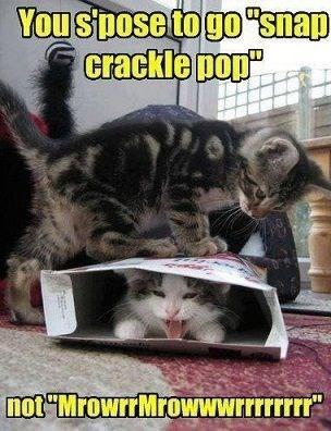 kitten squish Cats cereal - 7884578560