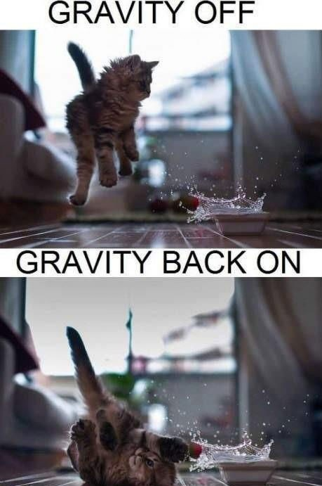 kitten water onoff spill Gravity Cats - 7884587008