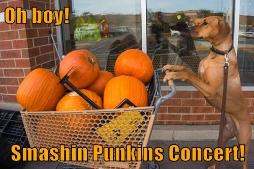 dogs,concert,smashing pumpkins,literally