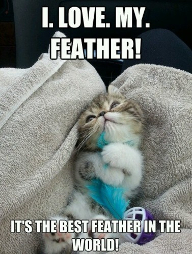 world,kitten,cute,feather,Cats