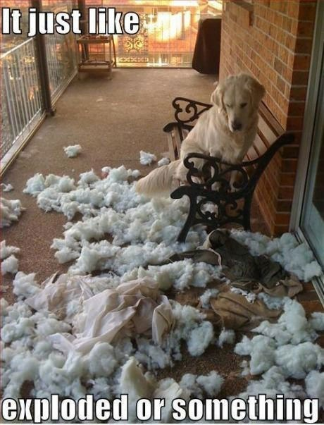 dogs,exploded,excuses,innocent
