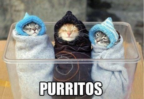kitten purritos cute burritos Cats bundled - 7884649472