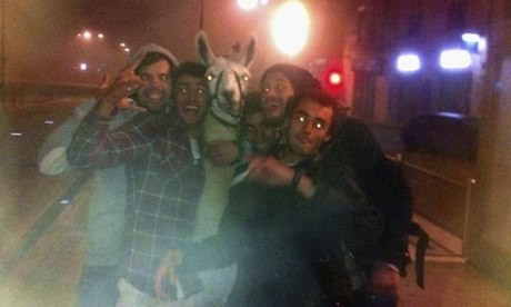 Drunken teenagers abduct a llama and take him on a tram ride