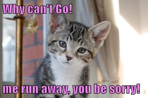 kitten cute lolspeak Cats - 7885707264