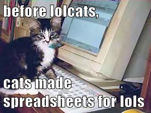 kitten lols spreadsheets cute Cats - 7885778688