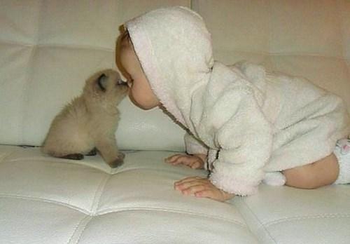 Babies kitten parenting - 7885785344
