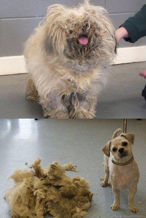 Cute Little Pup is Rescued from This Matted Mess