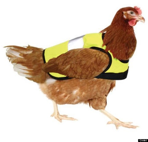 wtf chicken vest safety animals - 7885936128