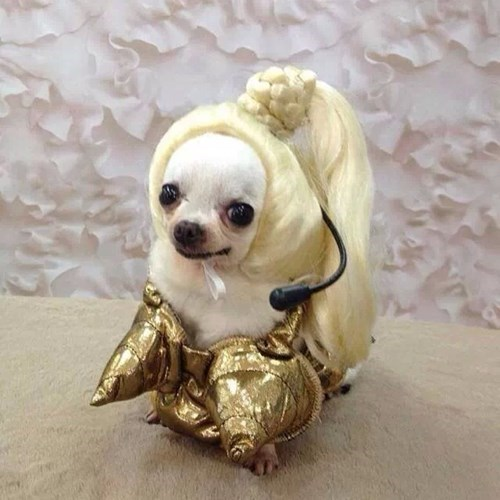 costume dogs Music Madonna drag - 7886032640 & This Dog in Drag Might Actually look Better Than Madonna - Poorly ...