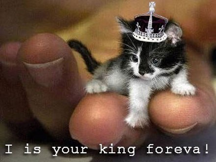 kitten king cute Cats - 7886745600