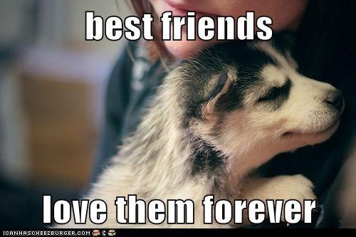 best friends puppies cute - 7886769920