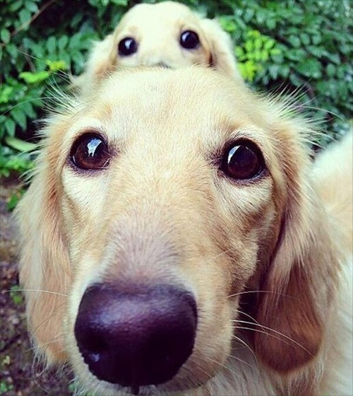 photobomb dogs - 7887440640