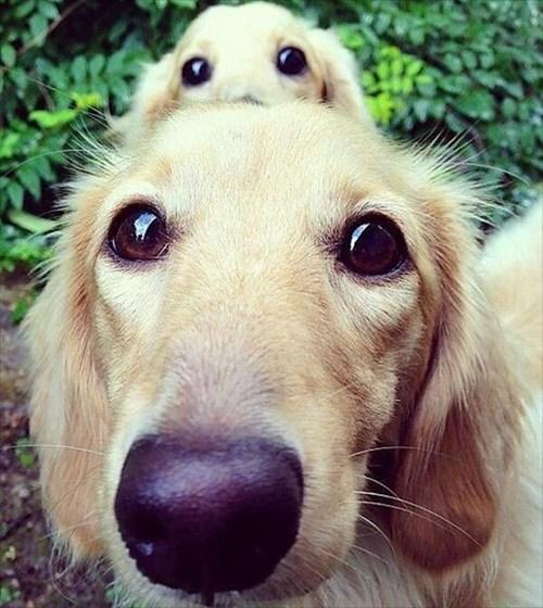 photobomb dogs - 7887440640