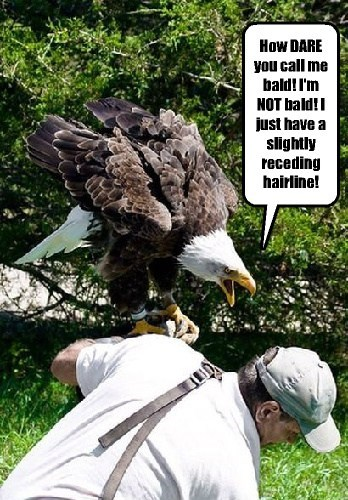 bald eagles funny insult - 7887477504
