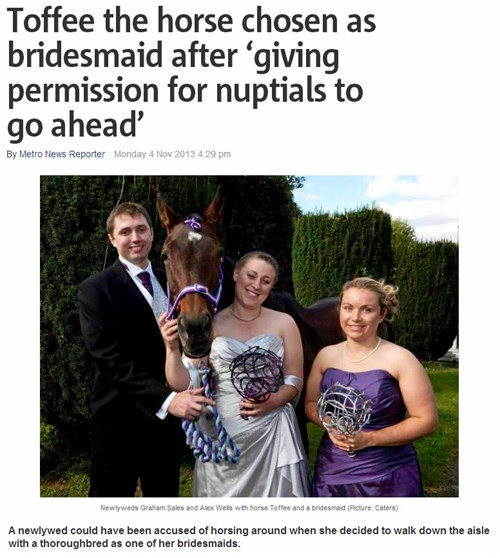 news,what,wedding,weird,horse