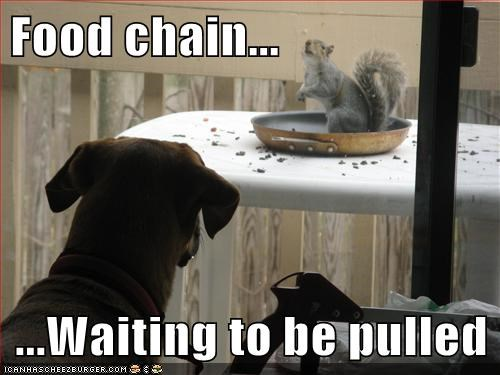 dogs,food chain,funny,squirrels