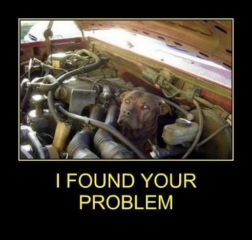 cars dogs engine funny wtf - 7887544320