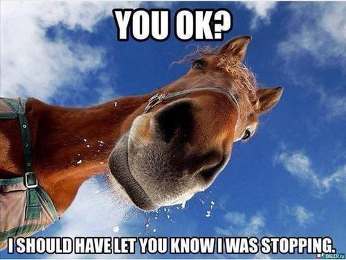 trot puns horses - 7887683584