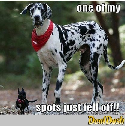 dogs tiny big funny spots