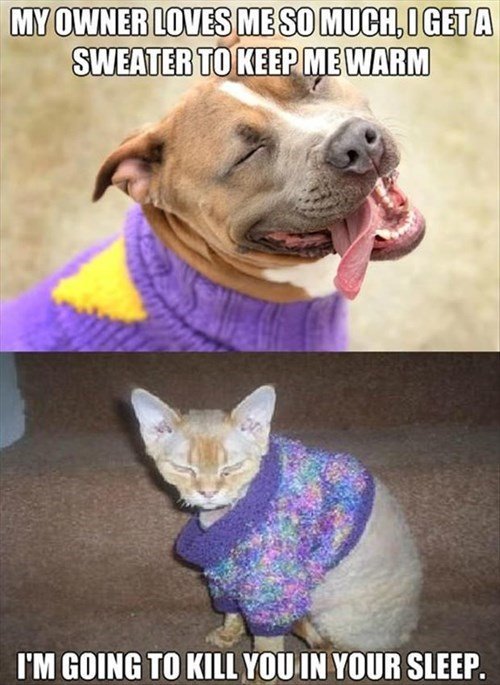 dogs differences Cats funny - 7887698944
