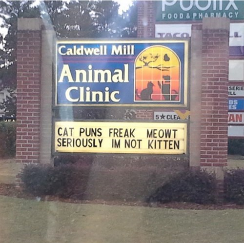 signs,puns,veterinarian,Cats