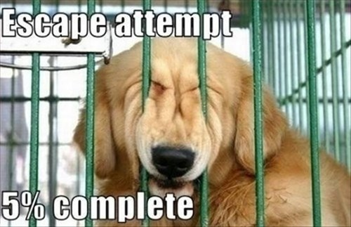 dogs escape kennel cute - 7887772416