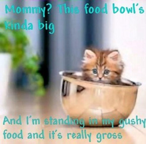 Cats cute food bowl kitten