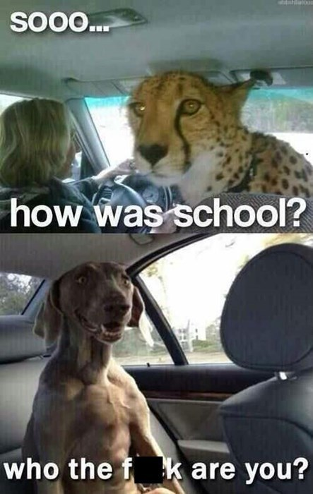 leopard dogs wtf scared funny - 7888619520