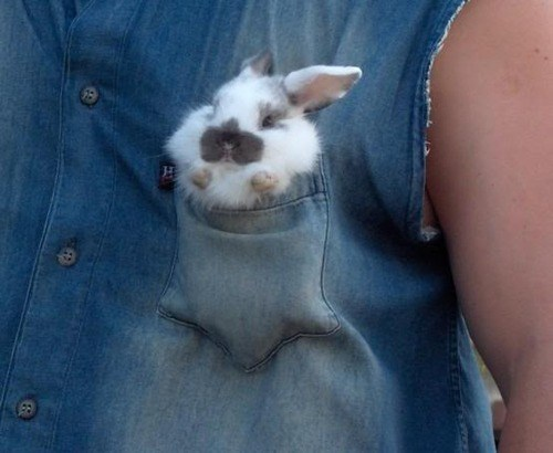 fashion rabbit animals poorly dressed - 7888661760