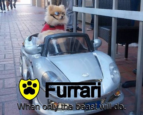 Furrari l l l When only the beast will do. When only the beast will do. When only the beast will do. d n n n n n n
