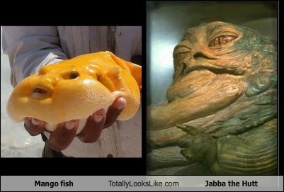 totally looks like mango fish jabba the hutt funny